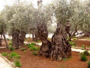 Экскурсия в Израиль из Шарма на 1 день